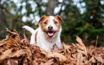 Seattle Dogs In Autumn: Seattle Pet Photography with Marika Moffitt