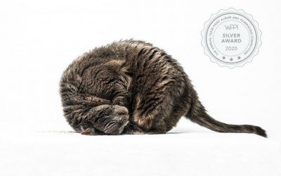 I'm So Excited Right Meow: Seattle Pet Photographer Wins A WPPI Silver Award.