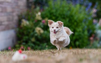 Dog Photography in Seattle: A Dirtie Dog is a Happy Dog