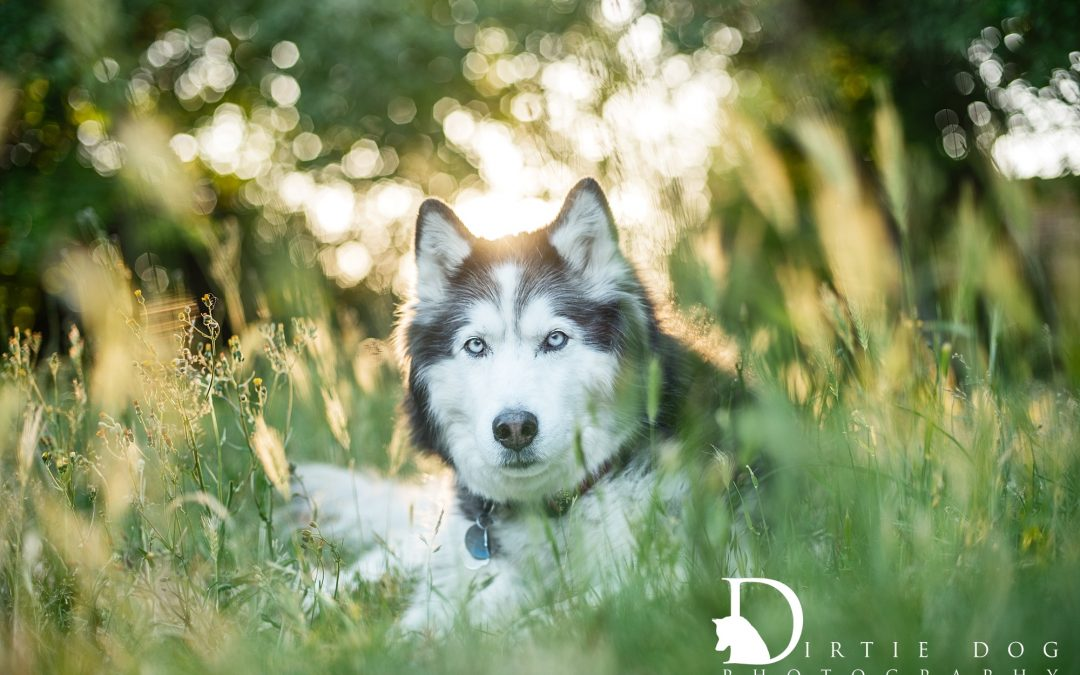 Your yard does not have to be pretty to be beautiful. Seattle Pet Photography by Marika Moffitt.