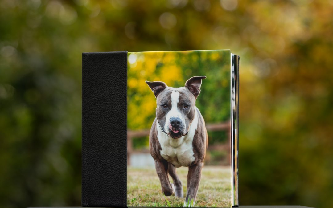 Three Extraordinary Gifts for Seattle Dog Moms