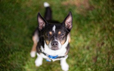 Rescue Dogs of Seattle: Shining The Light on Sidney