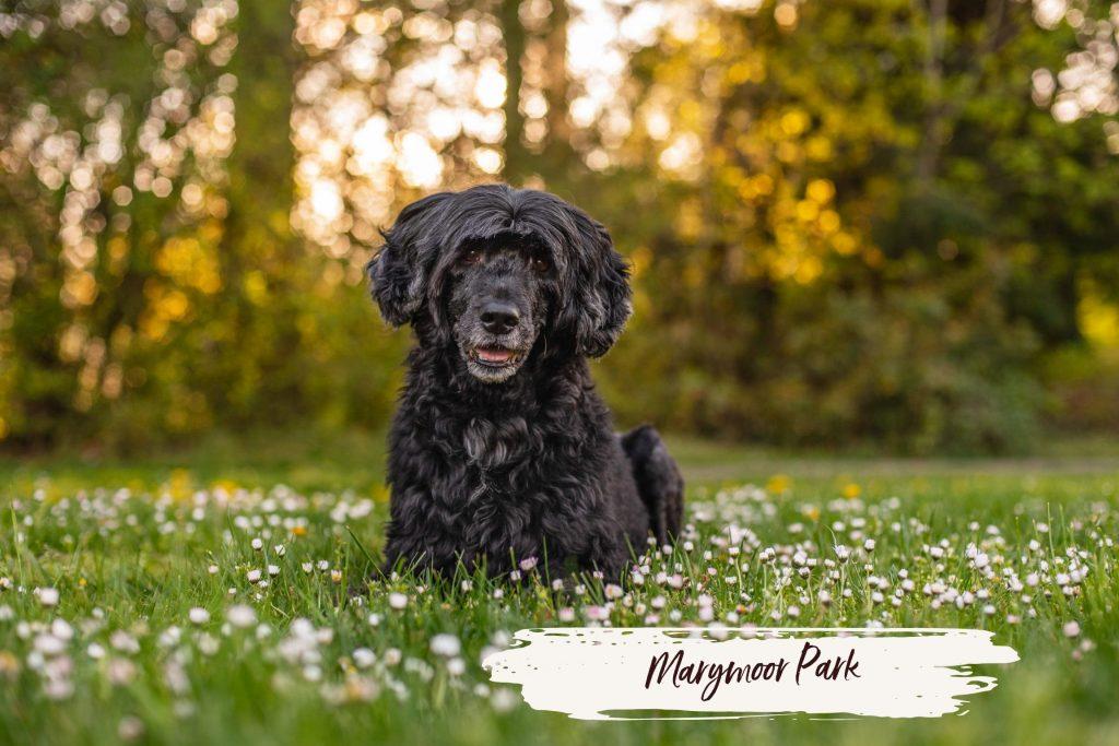 Best Seattle Parks for Dog Photos: Marymoor Park