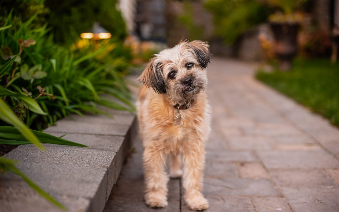 How I Get Your Dog to Look at The Camera: Three Tricks of The Trade.